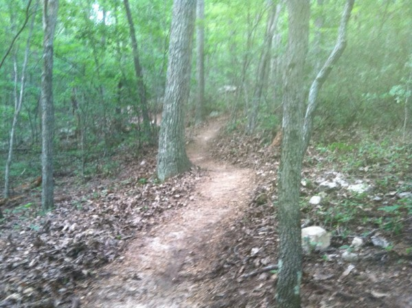 Massanutten's Newest Trail...beauty in the works!